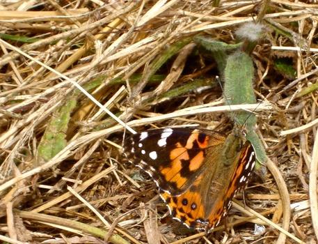20120208015454-butterfly