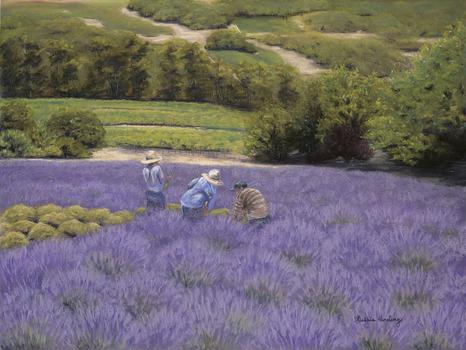 20120213164838-lavender_harvest