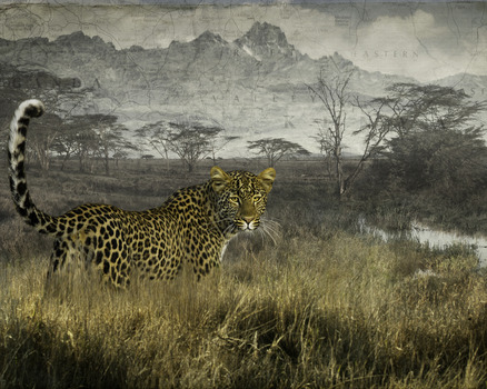 20120214231347-elusive_leopard
