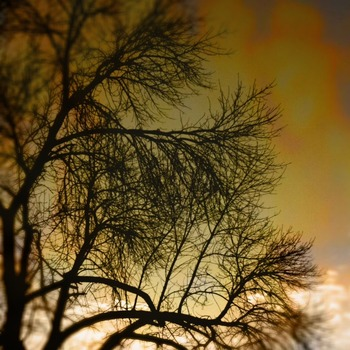 20120215170504-photo__4_