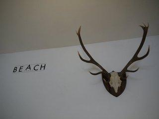 20120217163714-beach_horns