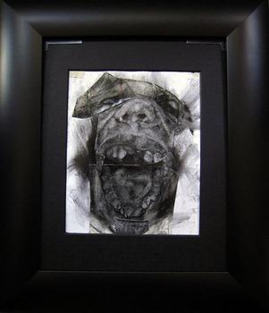 20120219175726-front_teeth