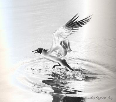 20120221011319-frybird