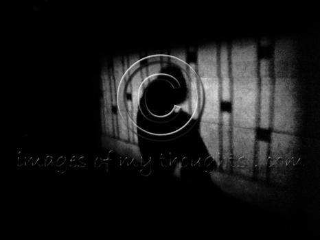 20050121_82804718_shadow3