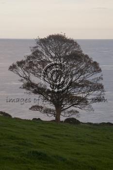 200710045d2000irelandtree