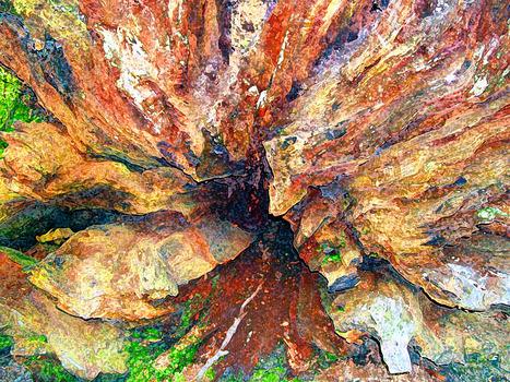20120222035115-tree_trunk