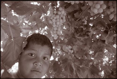20120223230346-boyinvineyard-2-lr
