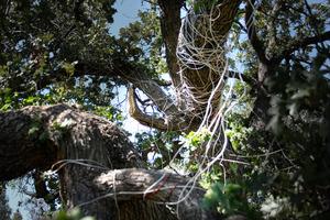 20120225033228-doctored_up_tree_flatten