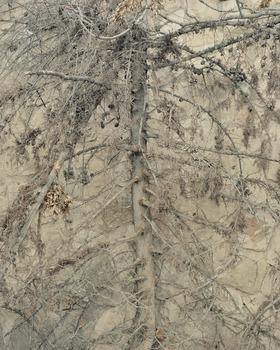 20120228193212-treecut