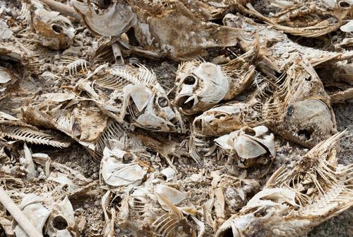 20120301043130-fish_heads