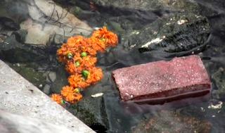20120301145954-marigolds-vid