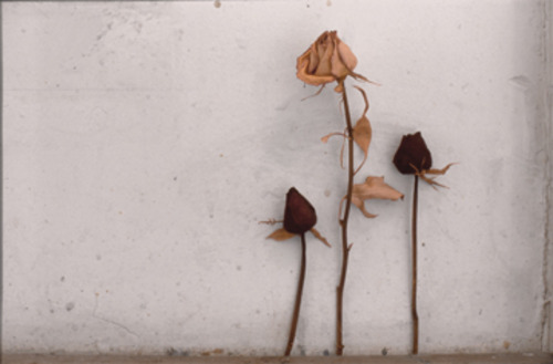 20120302150046-dried_flowers