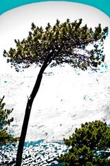 20120304195508-digital-tree-scapeape_1_as_mg_9822