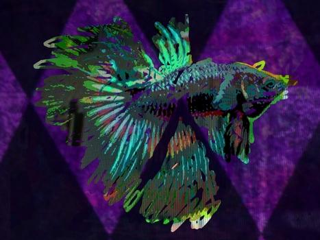 20120305115711-bettafish_t