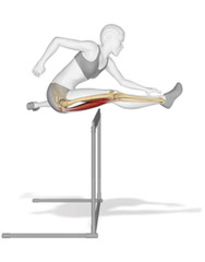 20120306162037-anatomy_hurdle_small