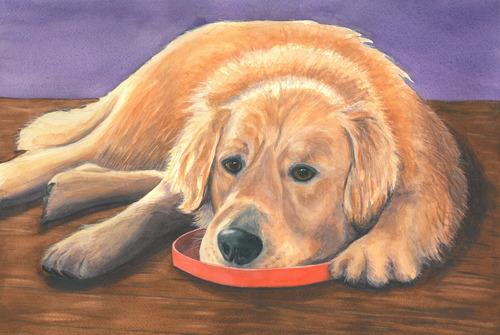 20120315214700-dog300
