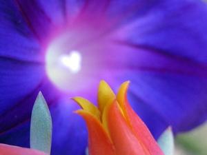 20120315043756-divine_flairs-40