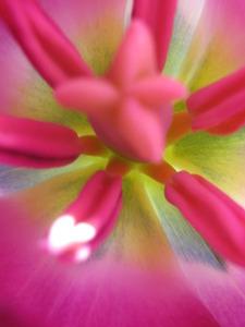 20120316170829-divine_flairs-21