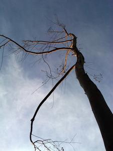 20120317004617-hester_offramp_tree