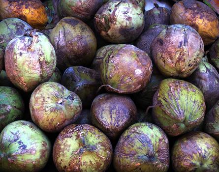 20120319221100-coconuts_final_print