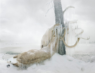 20120321190112-caribou