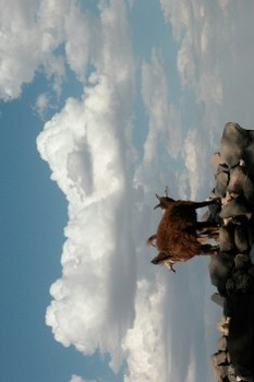 20120322215614-paola_yacoub_kiss_the_black_stones_teaserbild