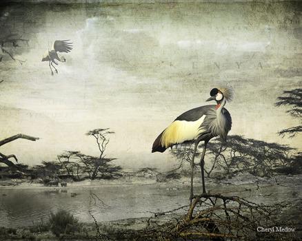 20120327200119-crownedcranes_cherylmedow
