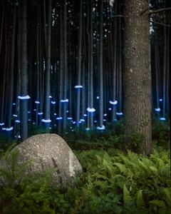 20120330204253-barryunderwood-ferns