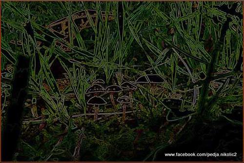 20120401120644-banstolske_gljive_copy