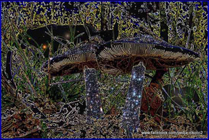 20120401130709-svemirske_gljive_i_meda_c