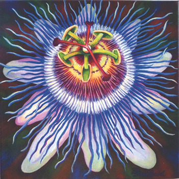 20120402160424-passionflower