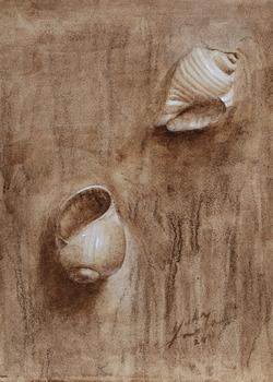20120405164516-sea_shells