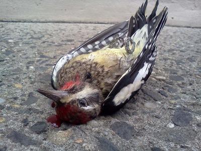 20120406232724-murder