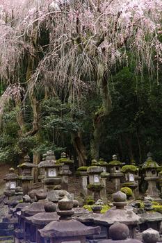 20120412053304-cemetery