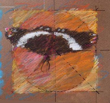20120412172435-butterfly_04_lr