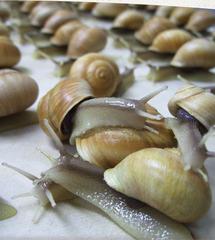 20120414011203-swenson-snails-web