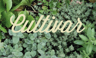 20120414153305-cultivar_email__1_