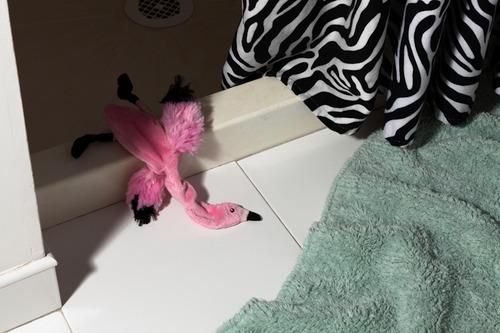 20130923150059-flamingo