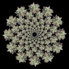 20120420052548-succulent_mandala_01-25