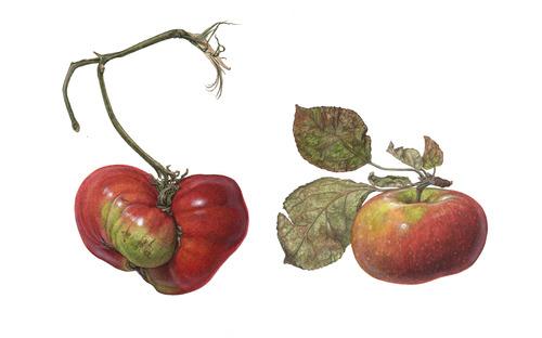 20120421002538-a-5_asuka_tomato2