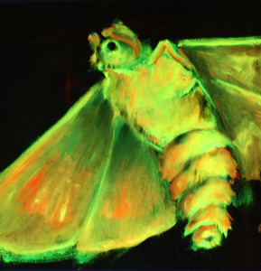 20120422002556-black_light_moth1