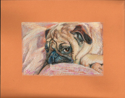 20120422214307-sophee_the_pug