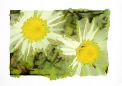 20120424233322-slurry_daisies_mg_9865