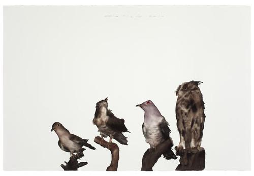 20120509012513-ghw_bird-2_big