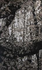 20120510113448-bomen26web