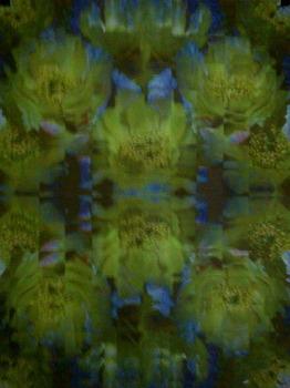 20120513023039-cactus_kaleidoscope__7