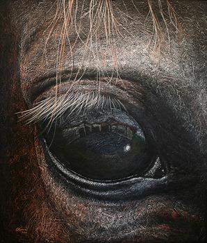 20120513233121-084-2011-vision-equina-120x140