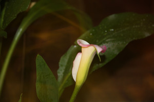 20120515010736-mom_s_lily