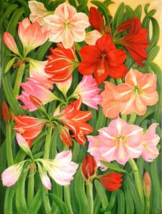 20120520063821-amaryllis_garden