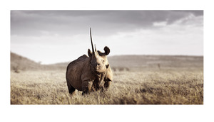 20120525101349-klaus_tiedge_t4_10757_monarch_of_lewa_1_60cm